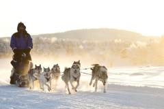 Fins en Zweeds Lapland (4)