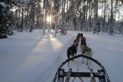 Fins en Zweeds Lapland (7)