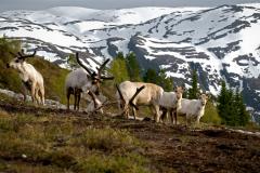 Fjordengebied Noorwegen (29)