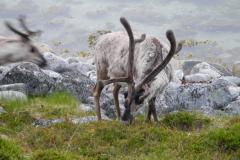 Noordkaap & Lapland (15)