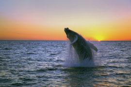 IJsland walvissafari